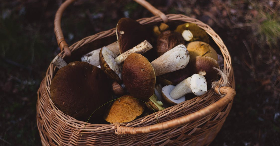 foraging-mushroom-sustainable